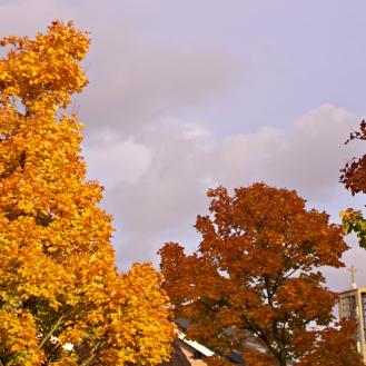 Belgian bright trees