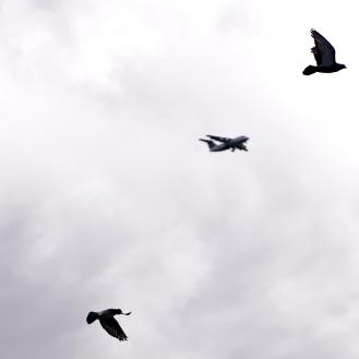 Birds and plane_stockholm pride