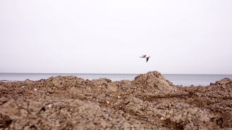 Granville Beach seagull