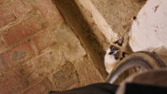 hirson cat