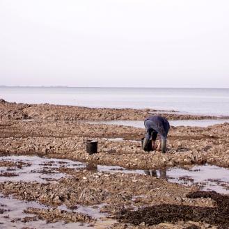 Oyster Gleaner_Granville_France