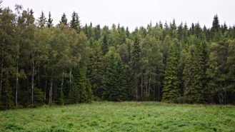 swedish campsite